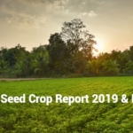 Sesame Seed Crop Report 2019 And Forecast - Organic Products India