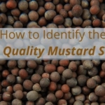 How to Identify the Best Quality Mustard Seeds
