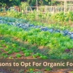 Reasons to Opt For Organic Food